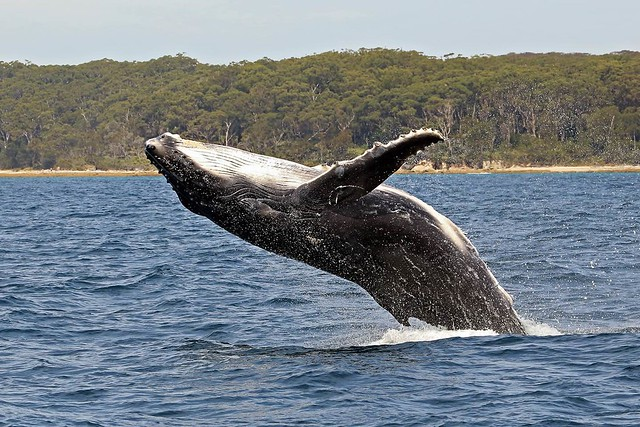whale or dolphin watching